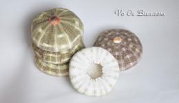 Vỏ cầu gai – nhum biển lớn (Keyhole Urchin)