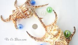 Vỏ ốc bàn tay quéo (Chiragra Spider Conch)
