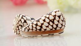 Vỏ ốc cối da trăn sọc ngang (Marbled Cone Shell)