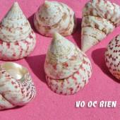Vỏ ốc nón đỏ (Strawberry Top Shell)
