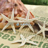 Sao biển nhí 10k (Little Starfish)