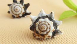 Vỏ ốc gốm (Common Pacific Vase)