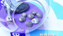 Vỏ ốc móng ngựa (Coromandel Shell)