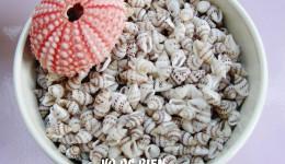 Vỏ ốc Tiny Dove Shells – India