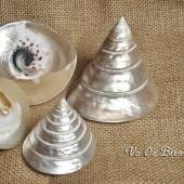 Vỏ ốc nón đen xà cừ (Top Shell Polished Pearl)