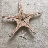 Sao biển lớn (Large Starfish)