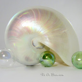 Vỏ ốc anh vũ xà cừ (White Pearl Nautilus Seashell)