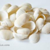 Vỏ sò lông (Bulk Seashell)