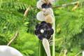 Lọ thủy tinh màu đính vỏ ốc (40×5) LOM405_02
