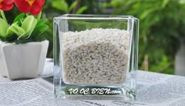Vỏ ốc gạo trắng