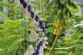 Chuông gió vỏ sò ốc lớn – phun màu CG16