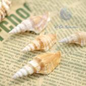 Vỏ ốc nhảy đuôi dài
