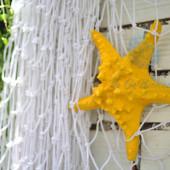 Sao biển gai lớn màu vàng