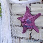 Sao biển gai lớn màu tím violet