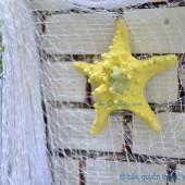 Sao biển gai lớn màu vàng kem