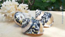 Vỏ ốc xà cừ da rắn kẻ vạch (Magpie Banded Shells)