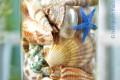 Lọ thuỷ tinh mix đầy vỏ sò ốc 11×20
