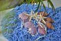 Lưới xanh trang trí vỏ sò ốc dây 3mm
