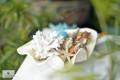 Khay đựng vỏ sò ốc – Trai tai bồ
