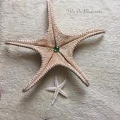 Sao biển lớn 36-40cm (Large Starfish)