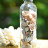 Lọ thủy tinh quà tặng vỏ sò ốc đủ loại MixShell_02
