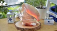 Đèn ngủ vỏ ốc bẹ hồng – ĐN45