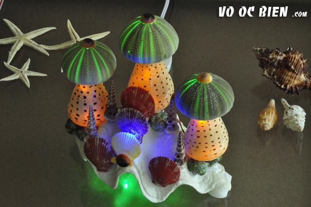 Đèn ngủ vỏ ốc (3 nhum biển) ĐN01