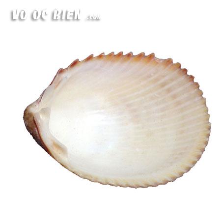 vo-so-nua-dai-4
