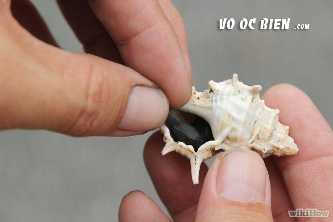 Kéo sạch những phần thịt ốc biển ra