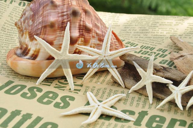 Sao biển nhỏ (Little Starfish)