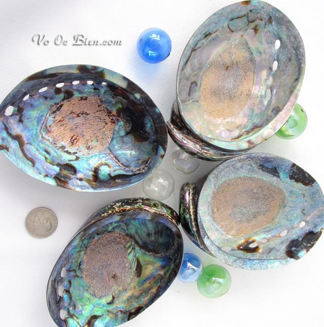 Vỏ bàu ngư vành tai xanh mài (Paua Polished Abalone Shell)