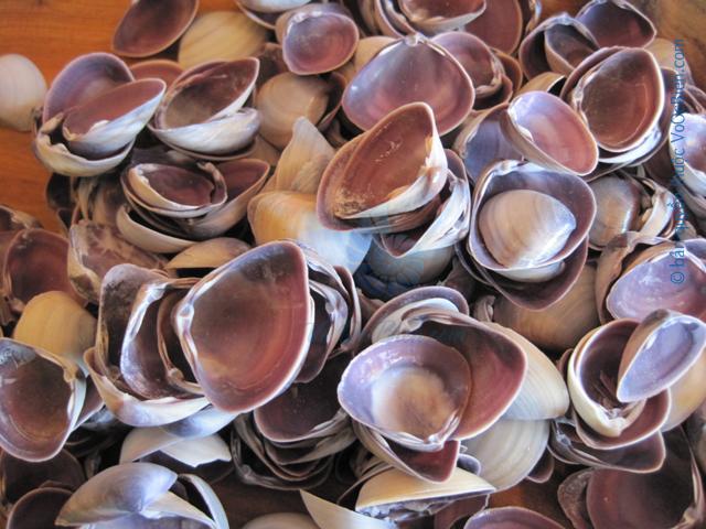 Vỏ hến tím (Asian Clam)