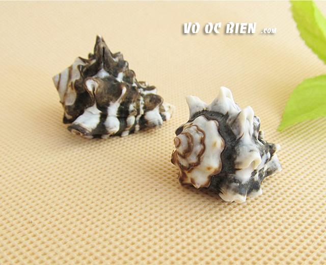 Vỏ ốc gốm (Common Pacific Vase):