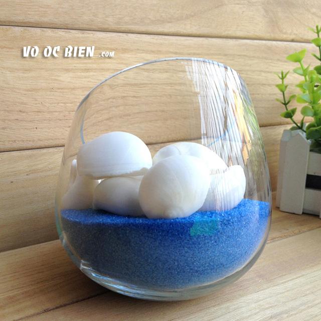 Vỏ ốc mỡ trắng (White Moon Snail):