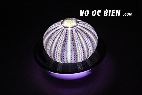 đèn ngủ vỏ ốc mang lại cho căn phòng không khí thật lãng mạng