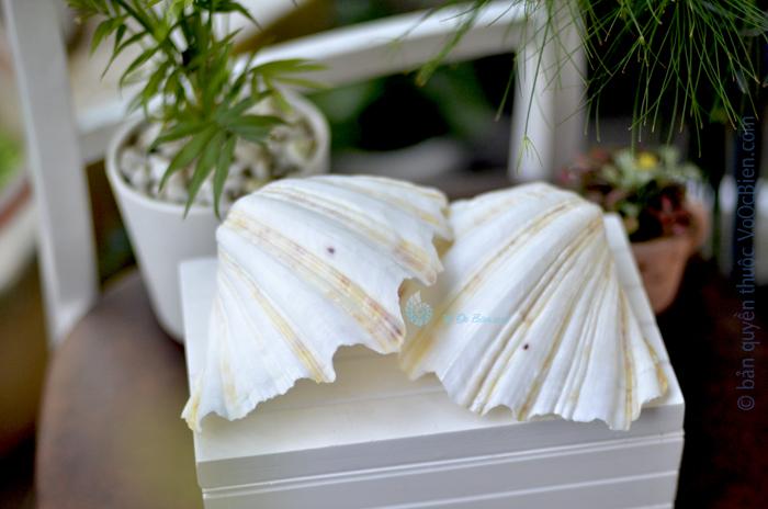 Vỏ trai tay gấu (Bear Paw Clam Shells)