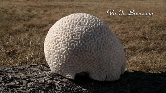 San hô Brain Coral