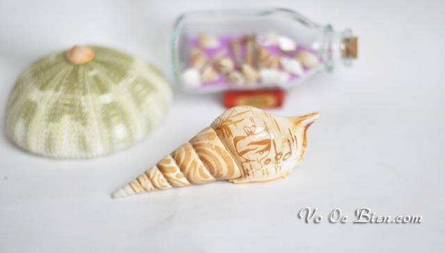 Vỏ ốc ngòi viết khắc