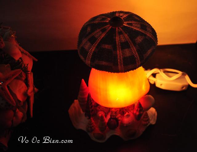 Đèn ngủ vỏ ốc sọ dừa & 1 nhum biển ĐN07