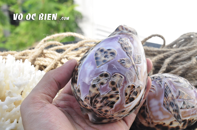 Vỏ ốc sứ vân hổ khắc