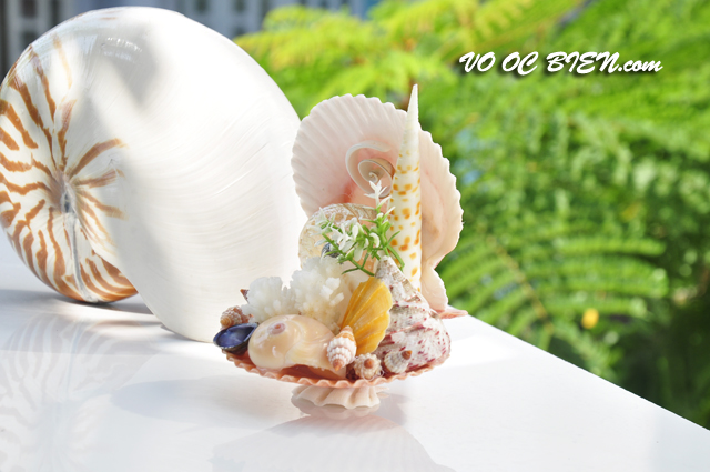 Ghế tựa vỏ ốc biển GTOB_01