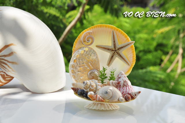 Ghế tựa vỏ ốc biển GTOB_02