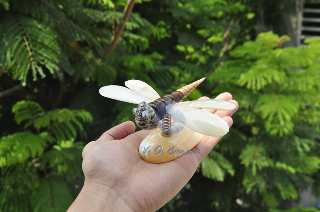 Chuồn chuồn trai vàng QLN_04 - hình chụp tại VoOcBien