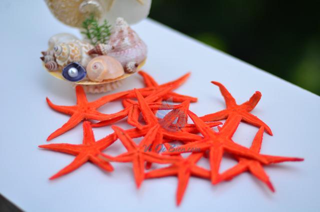 Sao biển nhỏ màu cam (Orange Mini Starfish) - hình chụp tại VoOcBien
