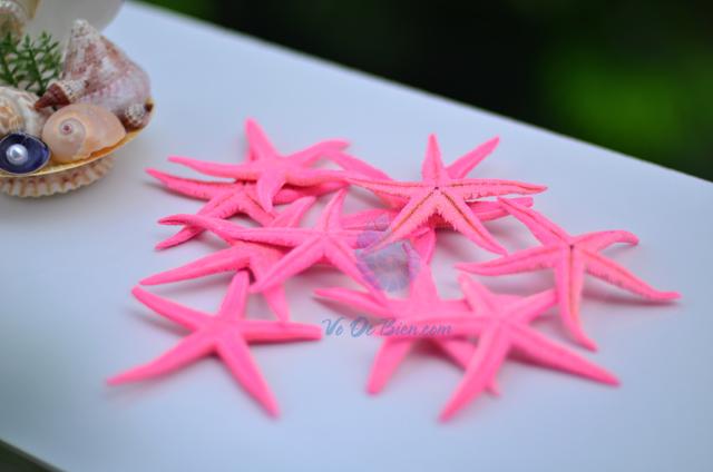 Sao biển nhỏ màu hồng (Pink Mini Starfish) - hình chụp tại VoOcBien