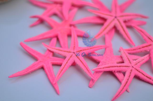 Sao biển nhí màu hồng (Pink Mini Starfish)