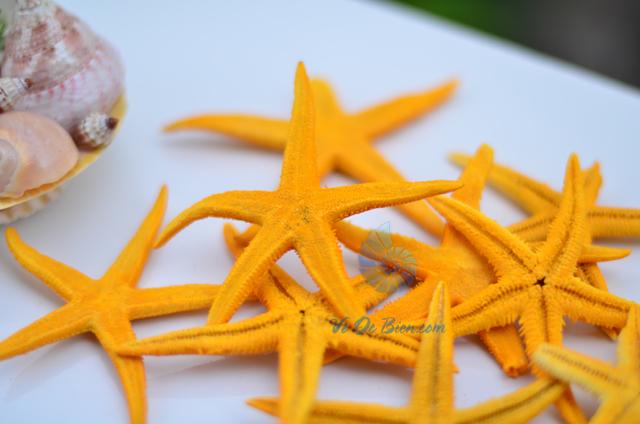 Sao biển nhỏ màu vàng (Yellow Mini Starfish) - hình chụp tại VoOcBien