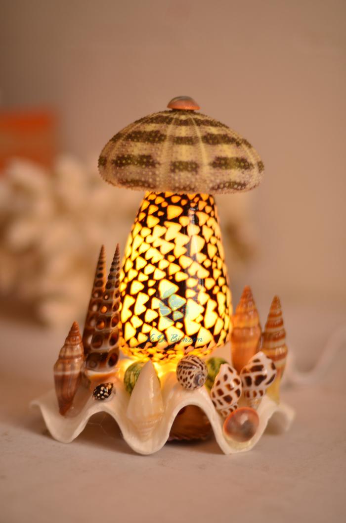 Đèn ngủ vỏ ốc cối da trăn & 1 nhum biển ĐN18 - hình chụp tại VoOcBien