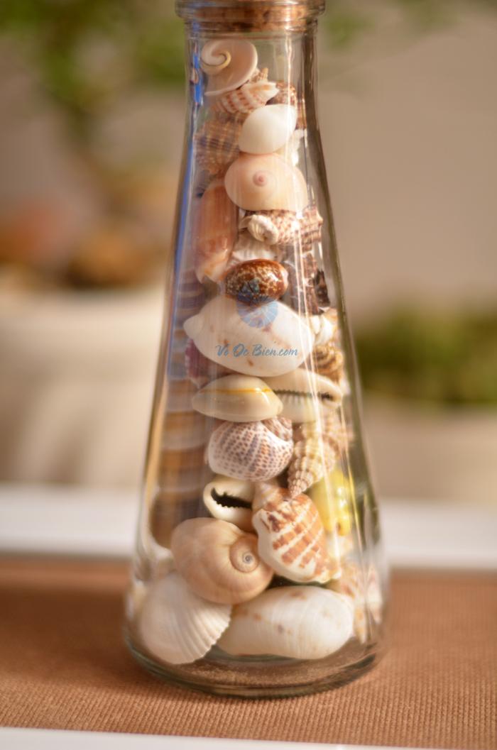 Hũ thủy tinh quà tặng vỏ sò ốc đủ loại MixShell_04 - hình chụp tại VoOcBien