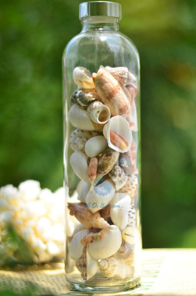 Lọ thủy tinh quà tặng vỏ sò ốc đủ loại MixShell_02 - hình chụp tại VoOcBien